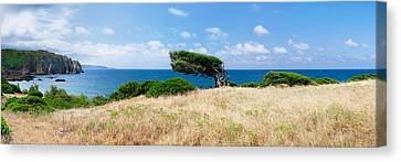 Bended Trees On The Bay, Bay Of Canvas Print by Panoramic Images