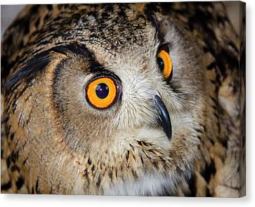 Bengal Eagle Owl Or Indian Eagle Owl Canvas Print by Nigel Downer