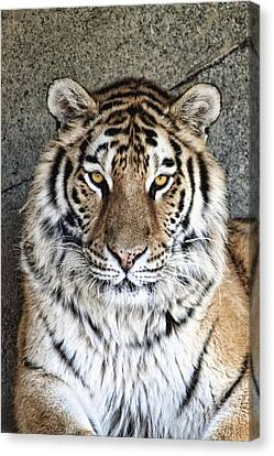 Bengal Tiger Vertical Portrait Canvas Print by Tom Mc Nemar