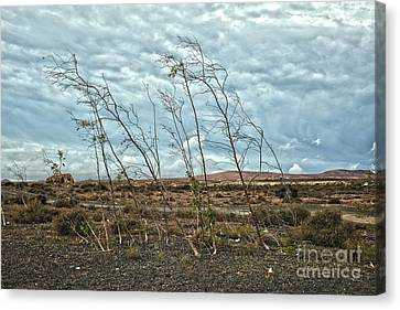 Bent Plants In The Wind Canvas Print by Patricia Hofmeester