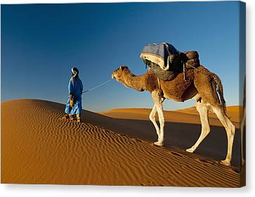 Berber Leading Camel Across Sand Dune Canvas Print by Ian Cumming