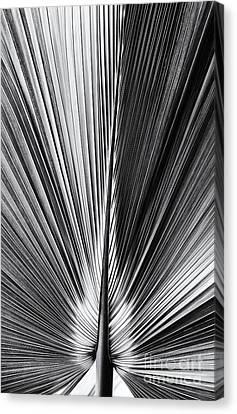 Bermuda Palmetto Monochrome Canvas Print by Tim Gainey