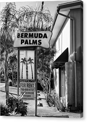 Bermuda Palms Bw Palm Springs Canvas Print by William Dey