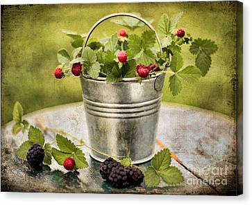 Berries Canvas Print by Darren Fisher