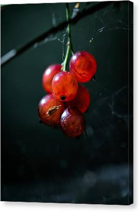 Berries Canvas Print by Leif Sohlman