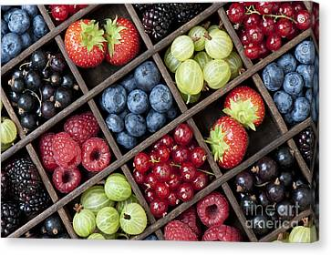 Berrylicious Canvas Print by Tim Gainey