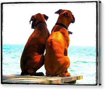 Best Friends Dog Photograph Fine Art Print Canvas Print by Laura  Carter
