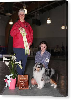 Best Jr Handler Ch Mistybrook's Time For The Blues Canvas Print by Chris Lynch