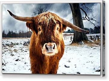 Betty The Cow Painting Canvas Print by Marvin Blaine