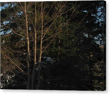 Between The Trees Canvas Print by Adam Smith