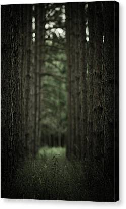 Between The Trees Canvas Print by Shane Holsclaw
