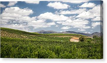 Between The Vines Canvas Print by Peter Tellone