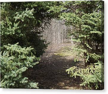 Beyond The Beaten Path Canvas Print by Brenda Brown