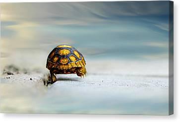 Big Big World Canvas Print by Laura Fasulo