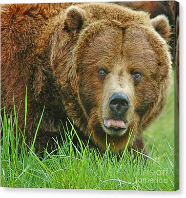 Big Brute Canvas Print by Nick  Boren