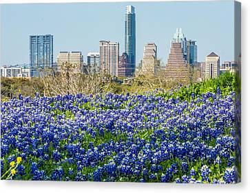 Big City Bluebonnets Canvas Print by Wally Taylor