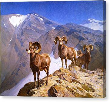 Big Horn Sheep - Wilcox Pass Canvas Print by Pg Reproductions