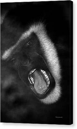 Big Yawn From This Monkey Canvas Print by Thomas Woolworth