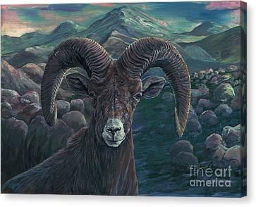 Bighorn Sheep Canvas Print by Tom Blodgett Jr