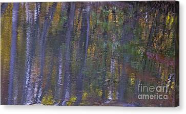 Birch Reflections Canvas Print by Cindy Lee Longhini