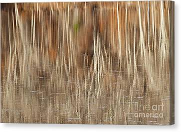 Birch Tree Reflections Canvas Print by Alan L Graham