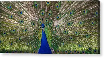 Bird Is The Word Canvas Print by Kristopher Schoenleber