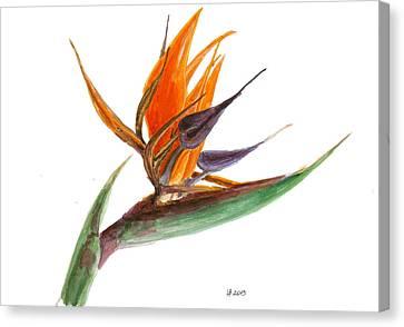 Bird Of Paradise Flower 2 Canvas Print by Irina Viatkina