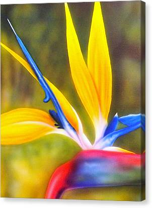 Bird Of Paradise Revisited Canvas Print by Darren Robinson