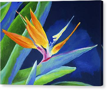 Bird Of Paradise Canvas Print by Stephen Anderson