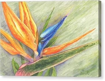 Bird Of Paradise - Strelitzia Reginae Canvas Print by Otilia Kocsis