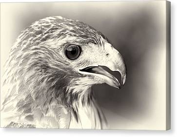 Bird Of Prey Canvas Print by Dan Sproul
