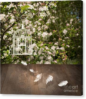 Birdcage With Feathers Canvas Print by Amanda Elwell