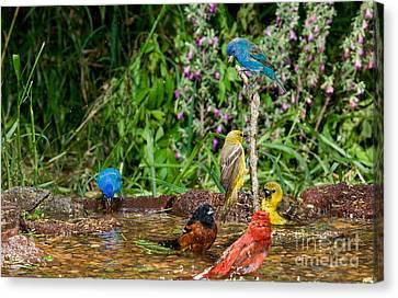 Birds Bathing Canvas Print by Anthony Mercieca