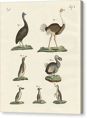 Birds Canvas Print by Friedrich Justin Bertuch