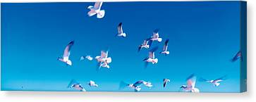 Birds In Flight Flagler Beach Fl Usa Canvas Print by Panoramic Images