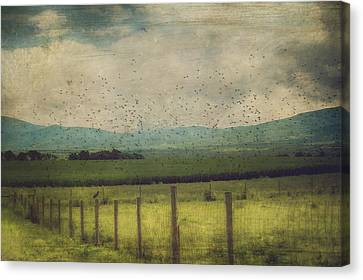 Birds In The Cornfield Canvas Print by Kathy Jennings
