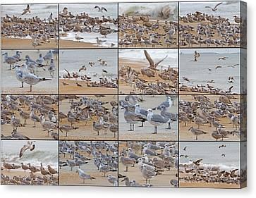 Birds Of Many Feathers Canvas Print by Betsy Knapp