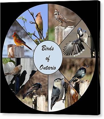 Birds Of Ontario Canvas Print by Davandra Cribbie
