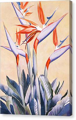 Birds Of Paradise Canvas Print by Mary Helmreich