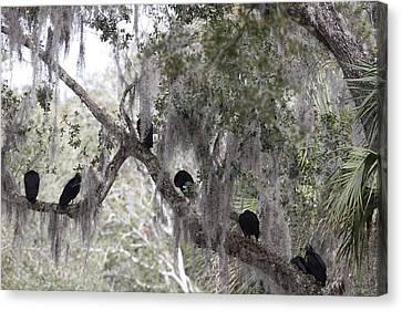 Birds On A Limb Canvas Print by Kimberly Oegerle