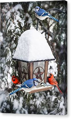 Birds On Bird Feeder In Winter Canvas Print by Elena Elisseeva