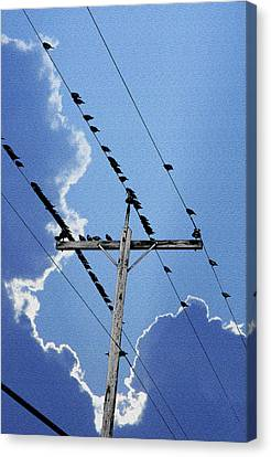 Birds On The Line Canvas Print by Mike Flynn