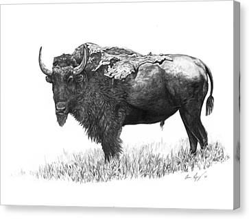 Bison Canvas Print by Aaron Spong