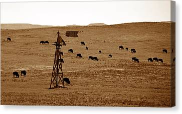 Bison And Windmill Canvas Print by David Lee Thompson