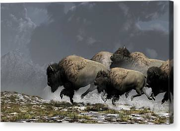 Bison Stampede Canvas Print by Daniel Eskridge
