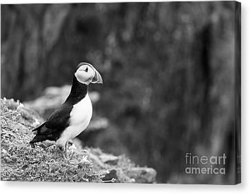Black And White Black And White Bird Canvas Print by Anne Gilbert
