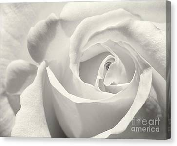 Black And White Curves Canvas Print by Sabrina L Ryan
