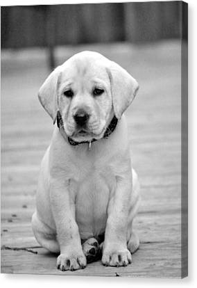 Black And White Puppy Canvas Print by Kristina Deane