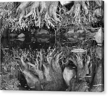 Black And White Root Reflection Canvas Print by Dan Sproul