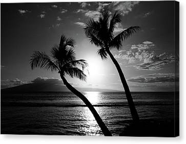 Black And White Tropical Canvas Print by Pierre Leclerc Photography